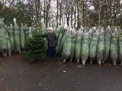Christmas trees sale-192Kb